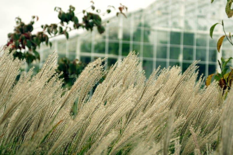Трава и парник, светлые цвета стоковые фото