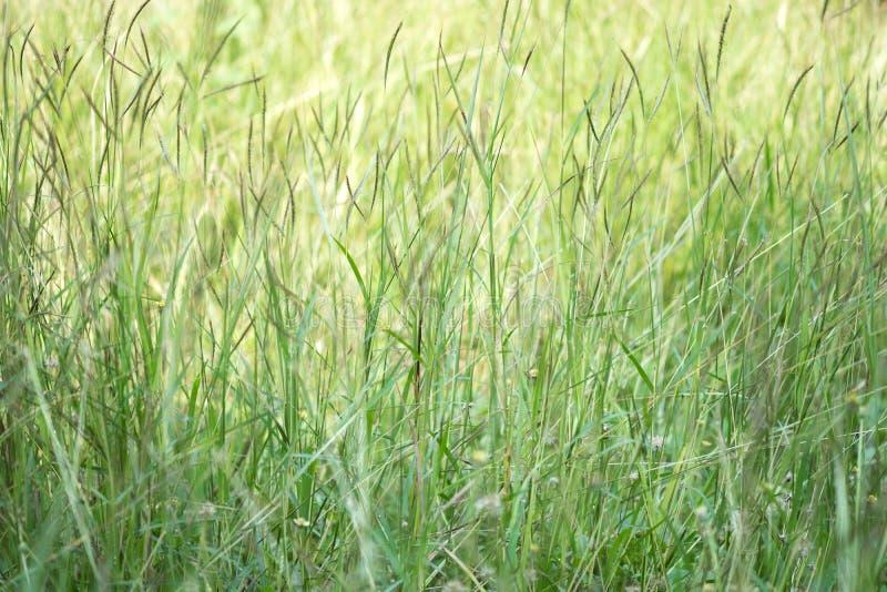 Трава и солнечный свет цветка на ослабляют утреннее время стоковое изображение rf