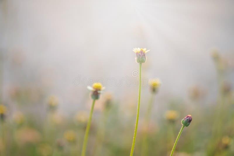 Трава и солнечный свет цветка на ослабляют утреннее время стоковые изображения