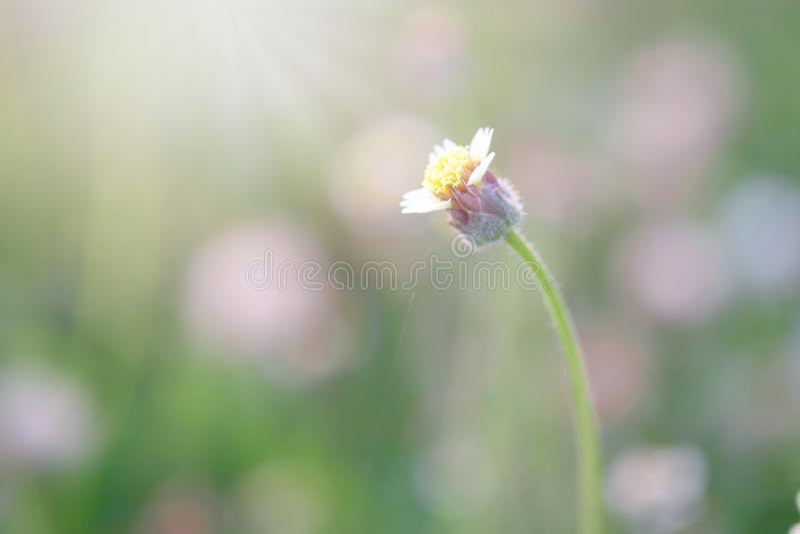 Трава и солнечный свет цветка на ослабляют утреннее время стоковое фото rf