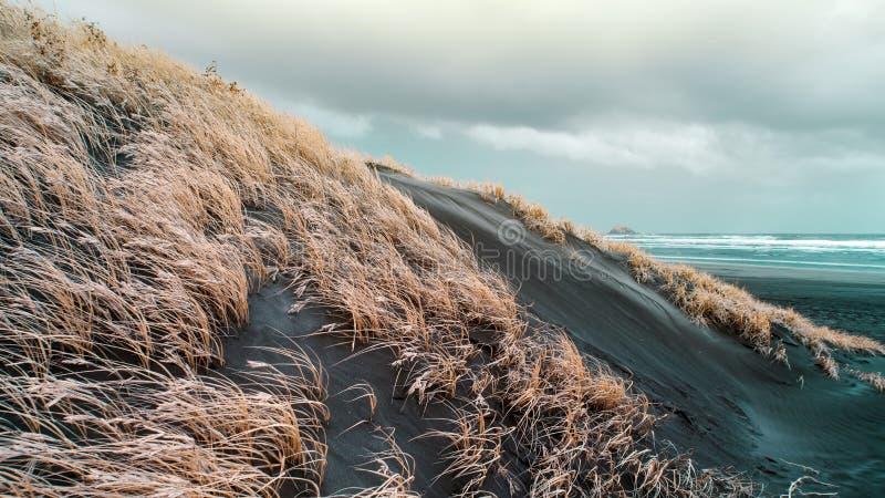 Трава, который выросли на песчанных дюнах для предотвращения размывания стоковая фотография rf