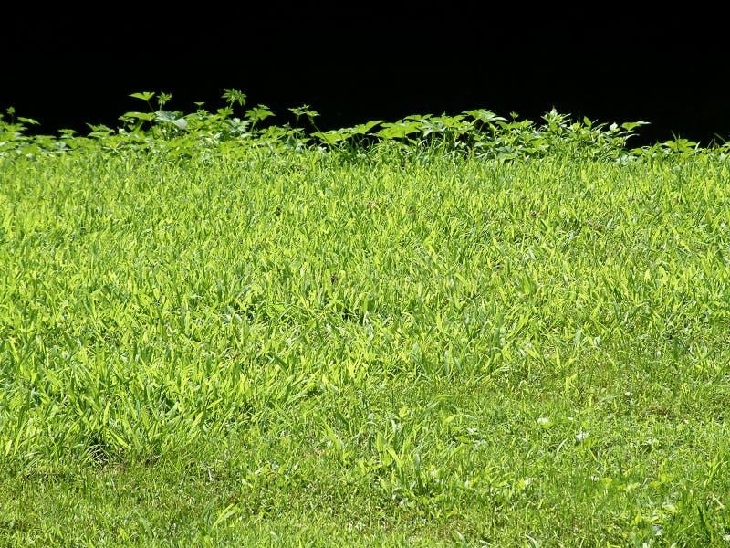 трава края