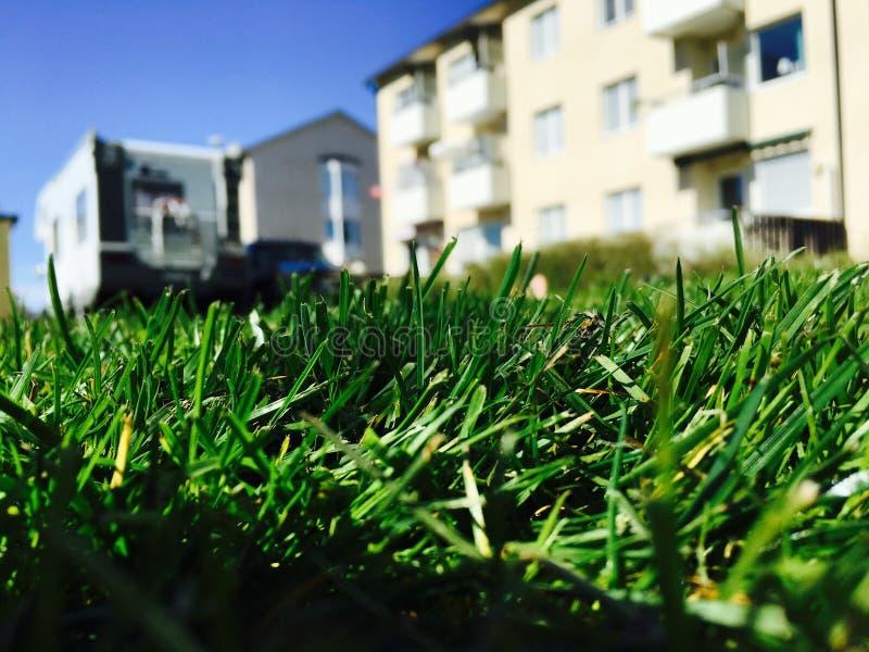 Трава крупного плана, расплывчатая предпосылка! стоковое изображение
