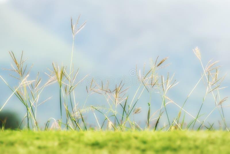 Трава крупного плана стоковое изображение