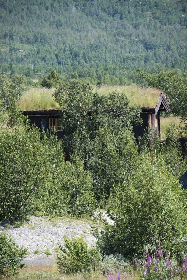 Трава крыши стоковые изображения rf