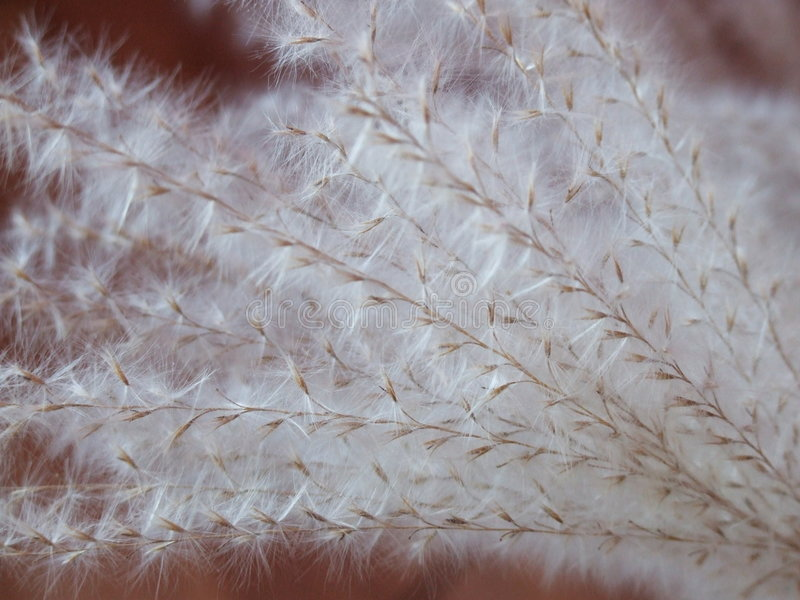 трава лезвий меховая мягкая стоковые изображения rf