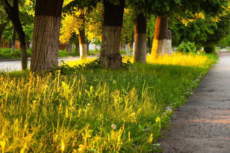 Трава летнего дня толстая яркая ая-зелен растет в парке На обеих сторонах вырастите большие зеленые деревья стоковая фотография