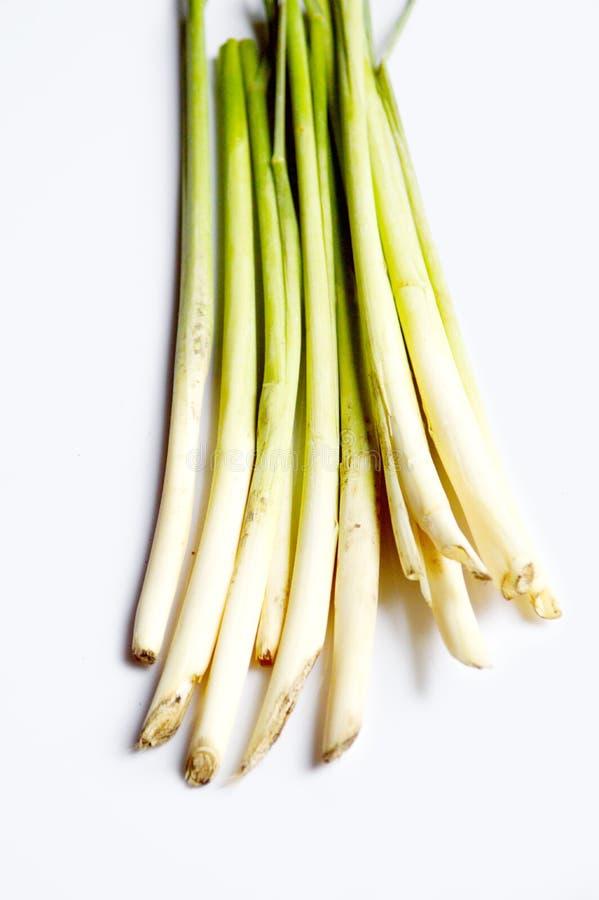 Трава лимона на белой предпосылке стоковое фото