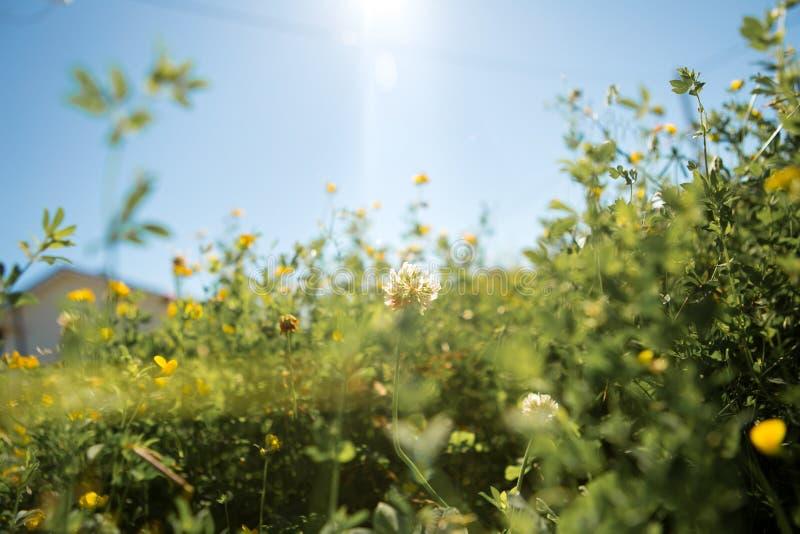 Трава луга против неба стоковые фото
