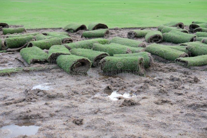 Трава лужайки крена зеленая для класть на сад стоковая фотография rf