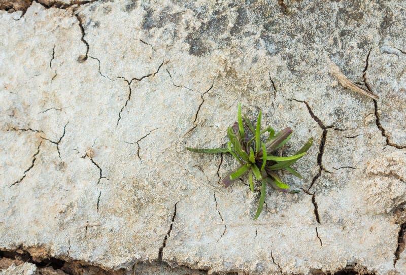 трава малая стоковые фотографии rf
