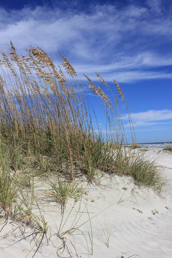 Трава моря в солнце стоковые изображения