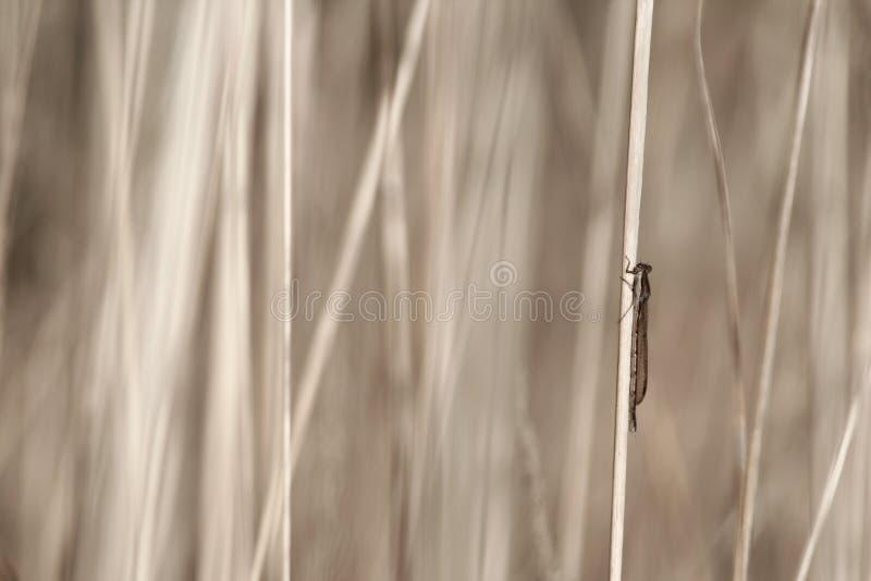 трава мухы дракона стоковые фотографии rf