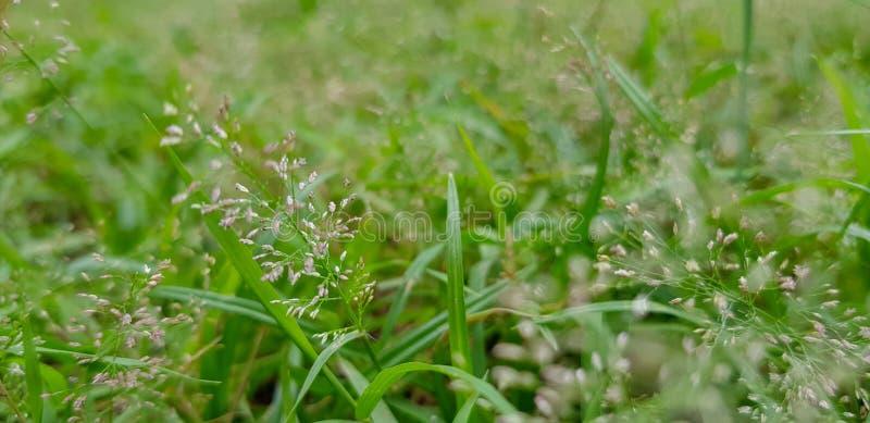 Трава на земле стоковое изображение