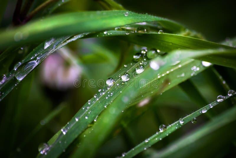 Трава на луге после дождя стоковые изображения