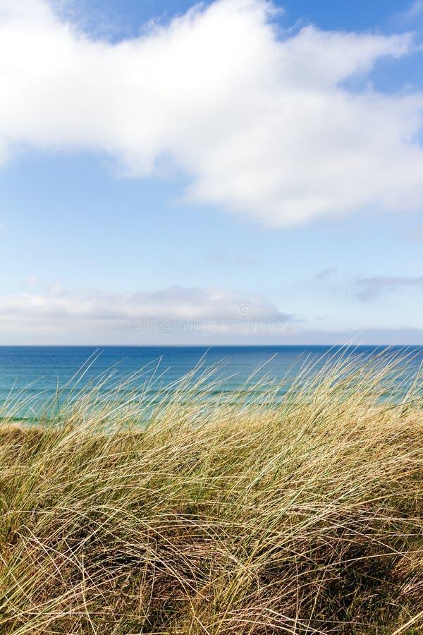 Трава на песчанных дюнах с голубыми океаном и небом стоковое фото rf