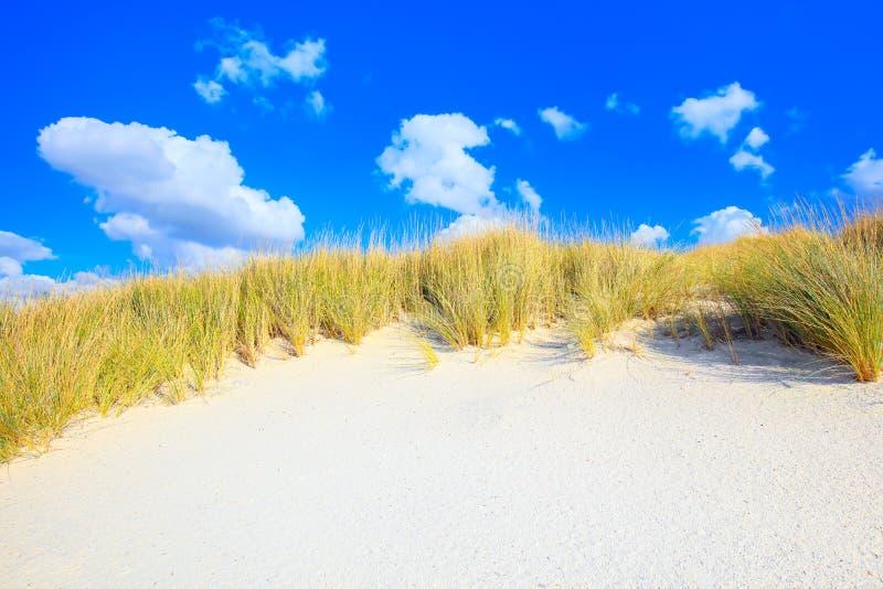 Трава на песчанных дюнах белизны приставает к берегу и голубое небо стоковые фото