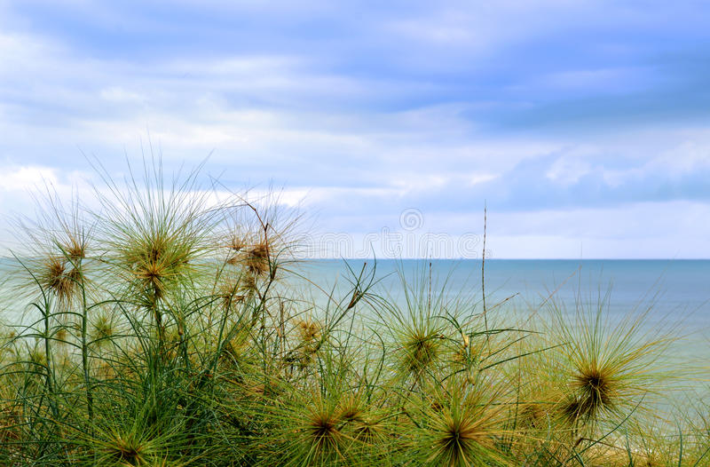 Трава на пляже в утре стоковая фотография