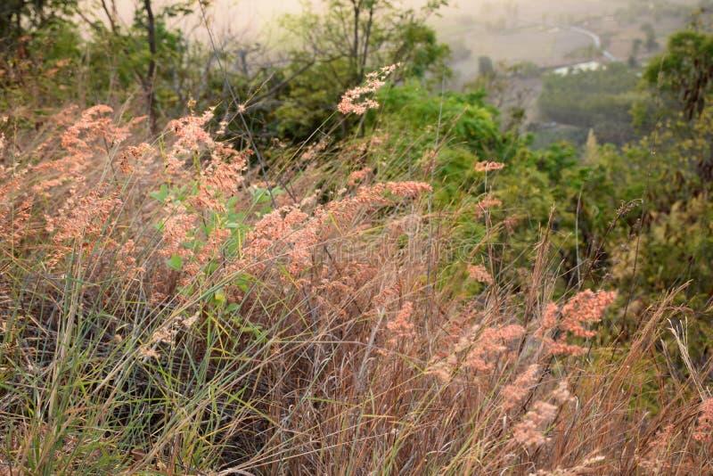 Трава на районе Chiang Kan, провинции Loei, Таиланде стоковое фото rf