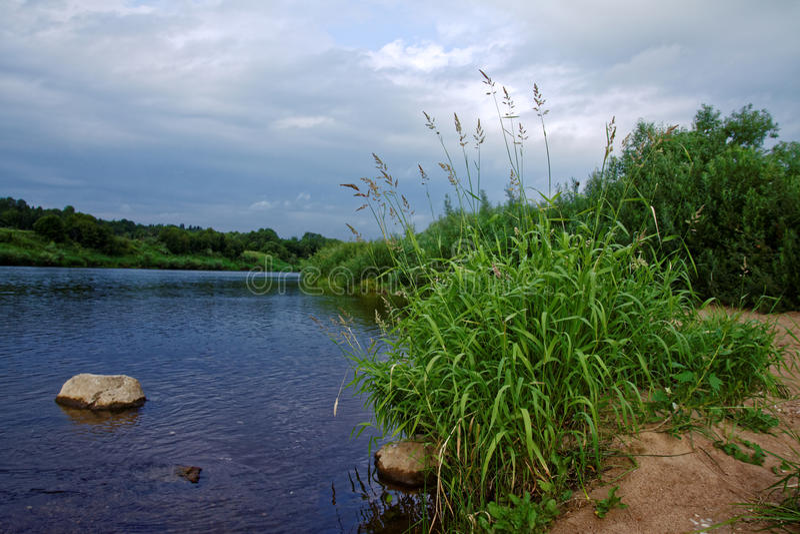 Трава на речном береге стоковое фото rf