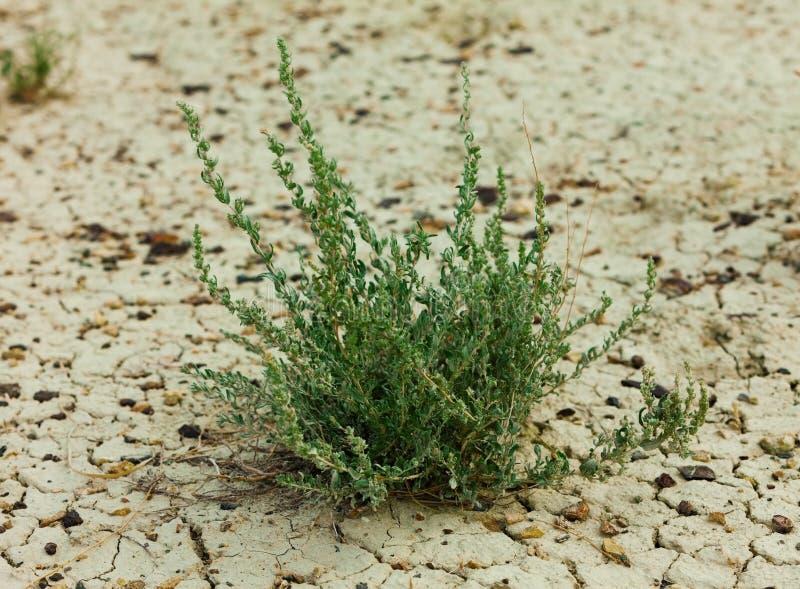 Трава на сухом конце грязи вверх стоковое изображение