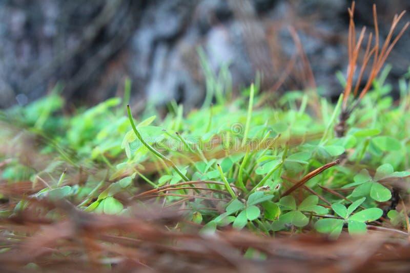 Трава на том основании, стоковые изображения rf