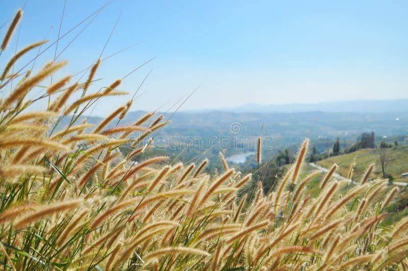 Трава на холме стоковые изображения rf