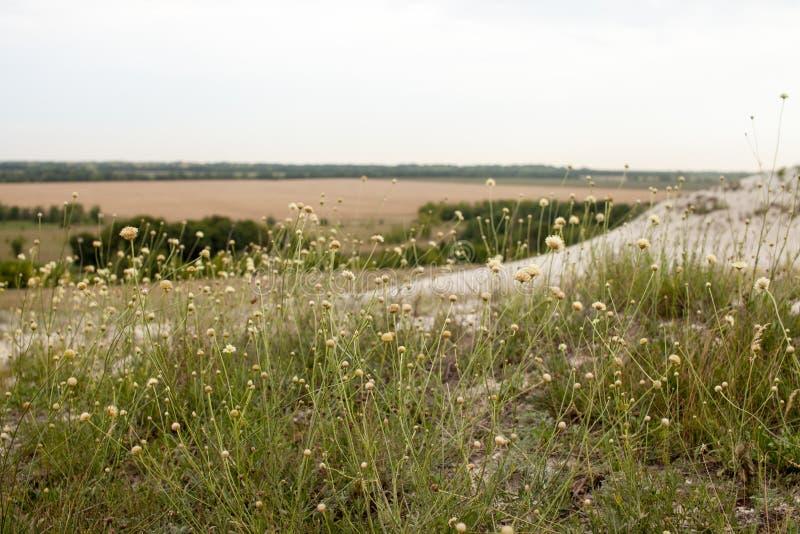 Трава на холме мела на заходе солнца стоковое изображение