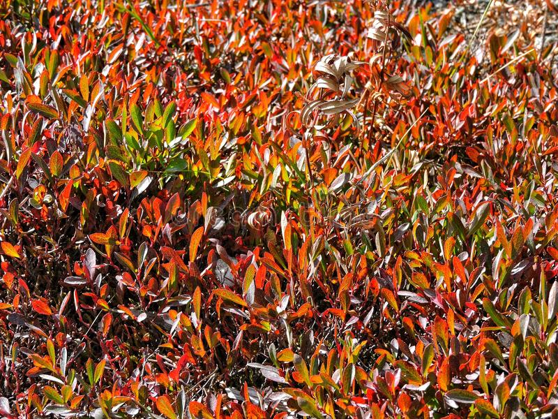 Трава около горячих источников стоковая фотография rf