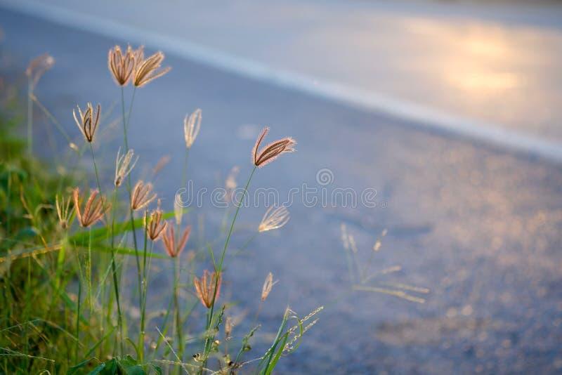 Трава около дороги стоковая фотография