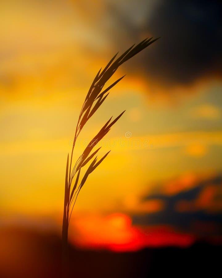 трава одичалая стоковое изображение rf