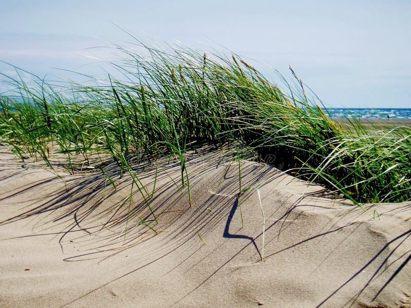 Трава песчанной дюны, черные пески утеса стоковое изображение