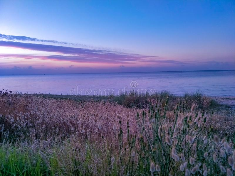 Трава пляжа стоковое фото