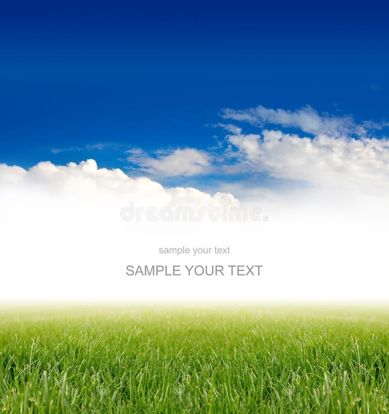 Трава под голубым небом стоковое изображение rf
