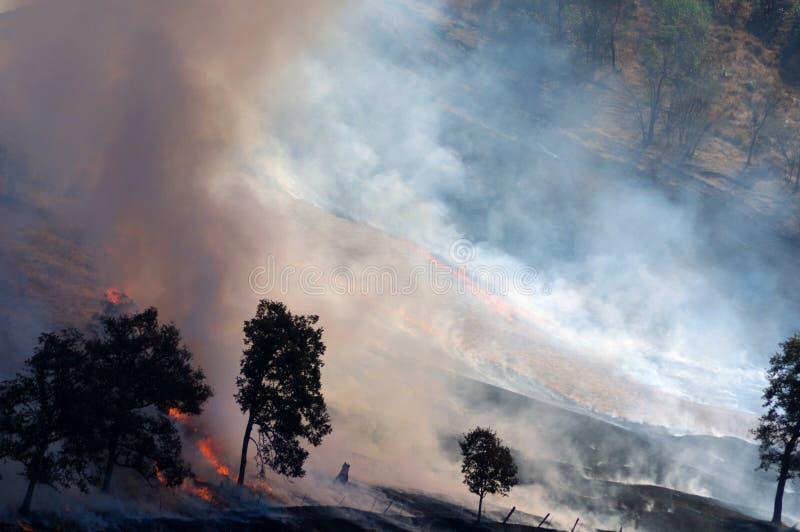трава пожара стоковая фотография rf