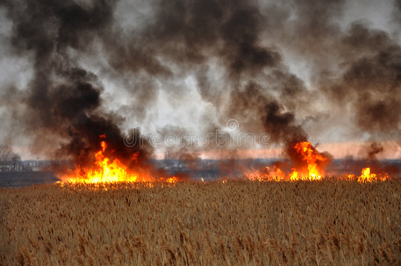 трава пожара стоковое изображение rf