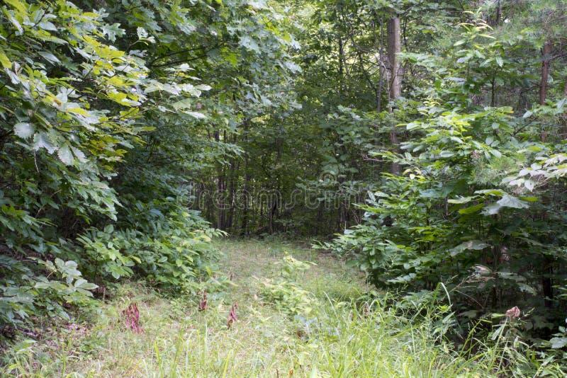 Трава покрыла проезжую часть через лес стоковые изображения rf