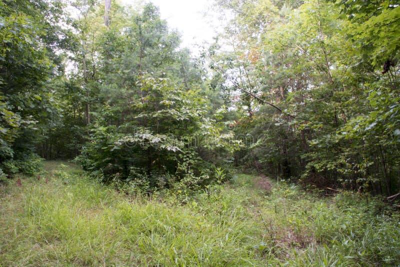 Трава покрыла проезжую часть через лес стоковые изображения