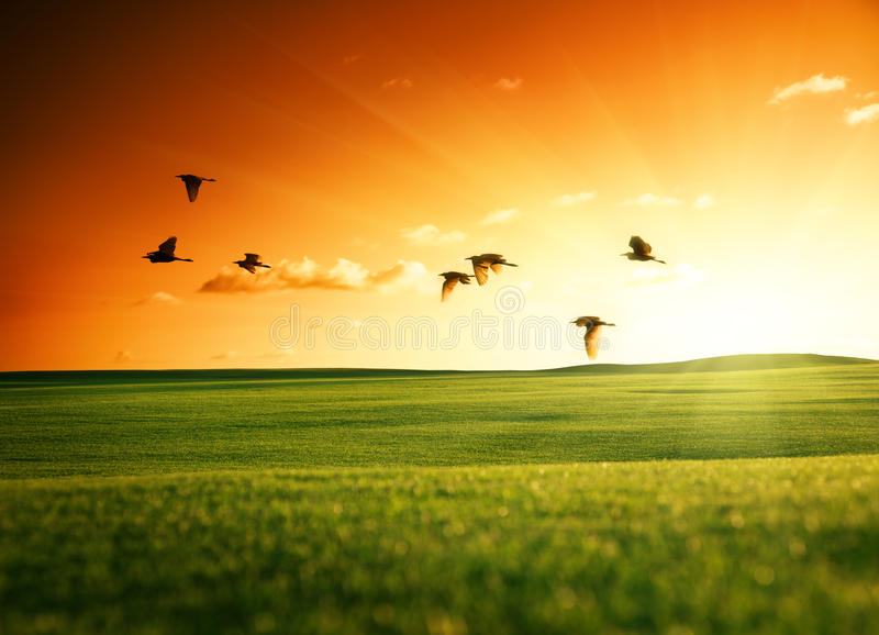 трава поля птиц стоковые фото