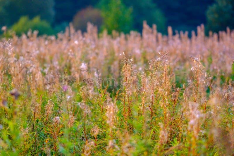Трава поля, сезон поздним летом стоковая фотография