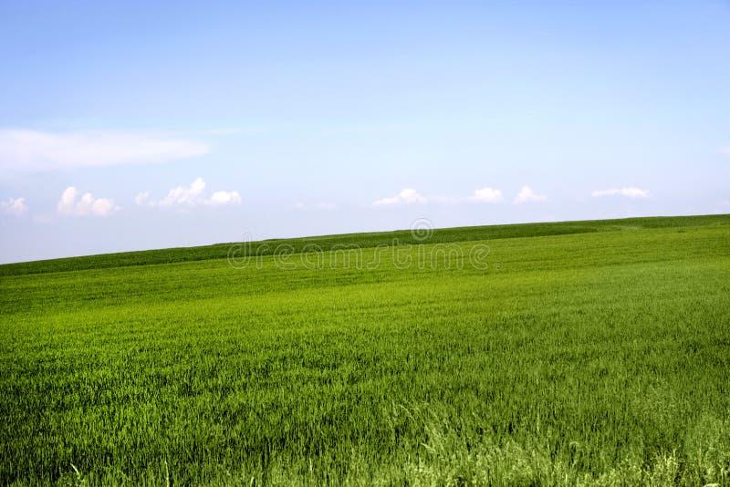 трава поля стоковая фотография