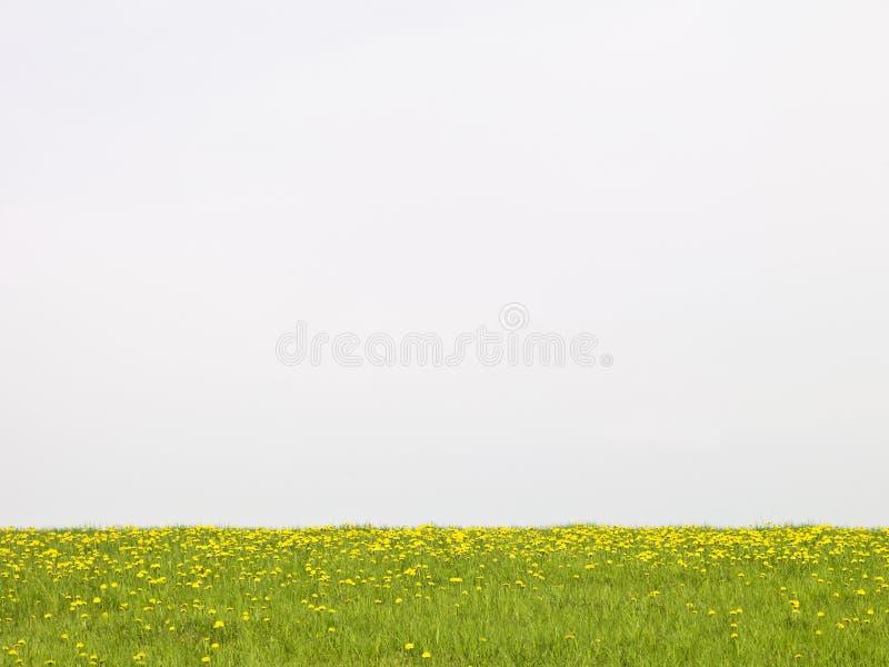 трава поля стоковое фото