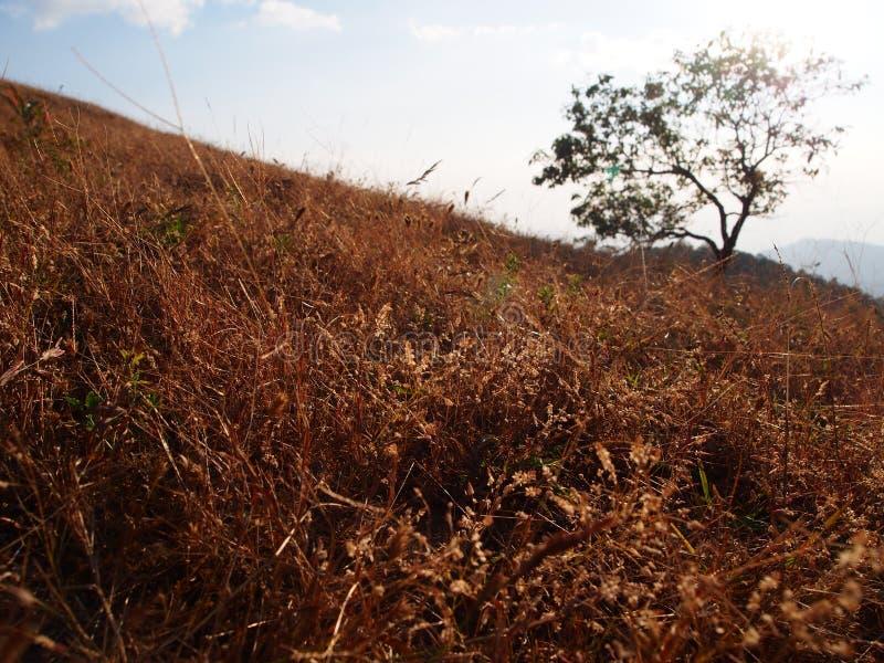 Трава понедельник Klui Таиланд стоковые фотографии rf