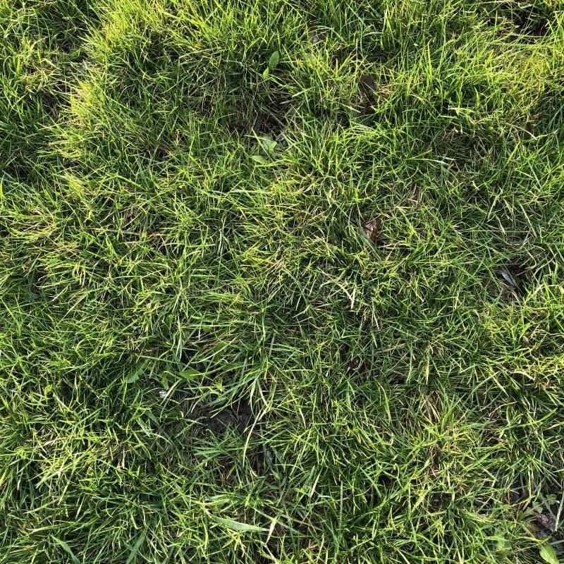 трава предпосылки крутая свежая uncut зеленая стоковое изображение rf