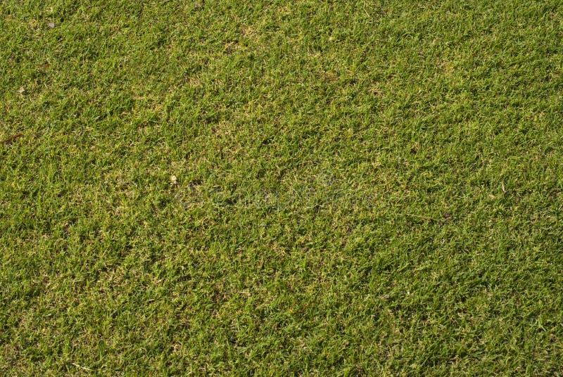 трава предпосылки стоковые изображения