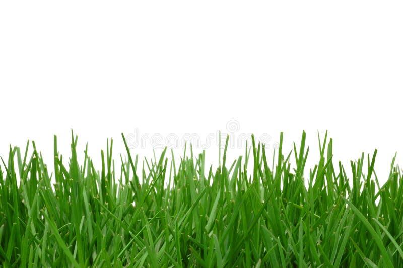 трава предпосылки стоковые фото