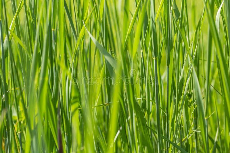 трава предпосылки одичалая стоковое фото
