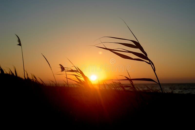Трава против красного заходящего солнца Золотой свет стоковые изображения