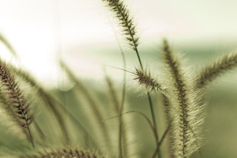 Трава пляжа стоковые изображения