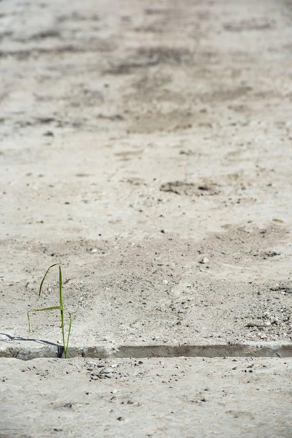 Трава растет через зазор между бетонными плитами стоковые изображения